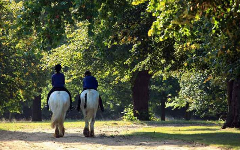 The Riding in Hyde Park Experience