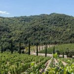 Chianti off-road wine tour