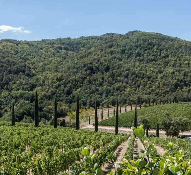 Experience Chianti Off-Road wine tour